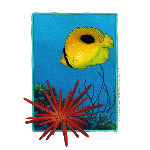 Pench Urchin with Butterfly Fish